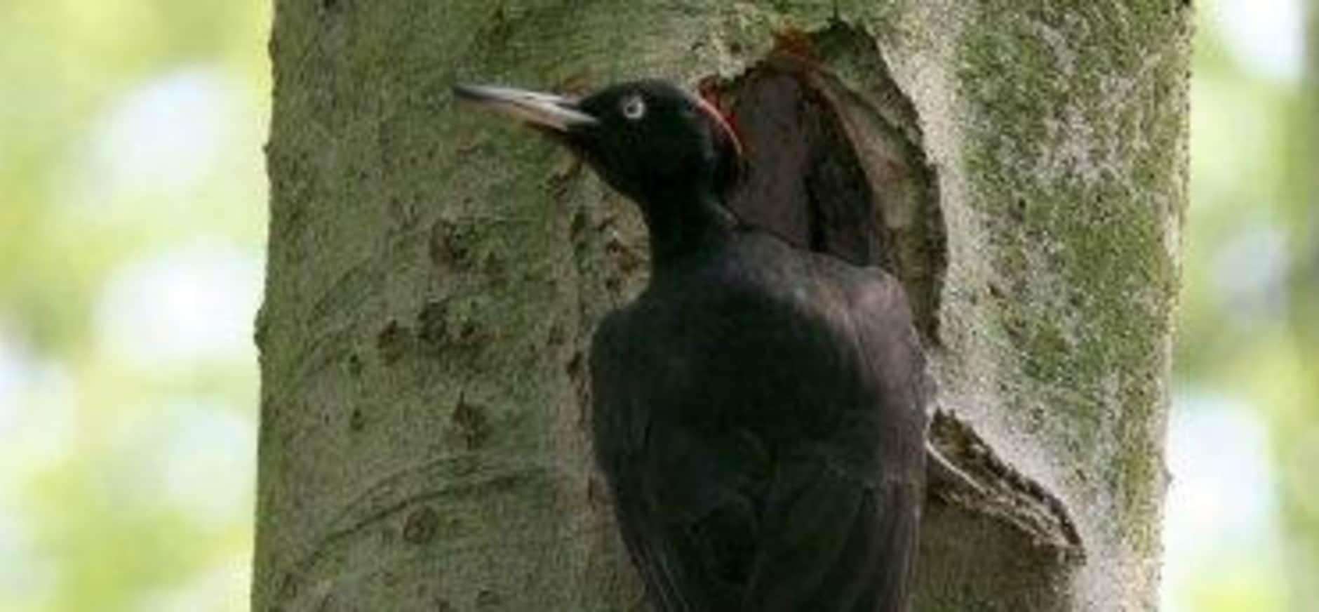 Kom vogels kijken op Oosterheide