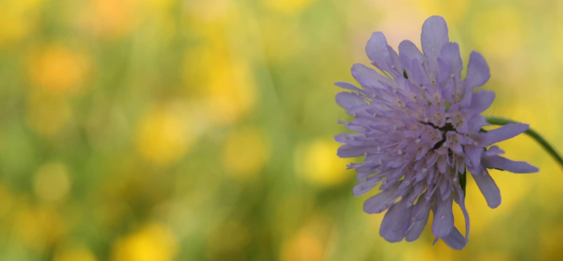 Bijzondere plant voor nieuwe leden op Tuinbeurs