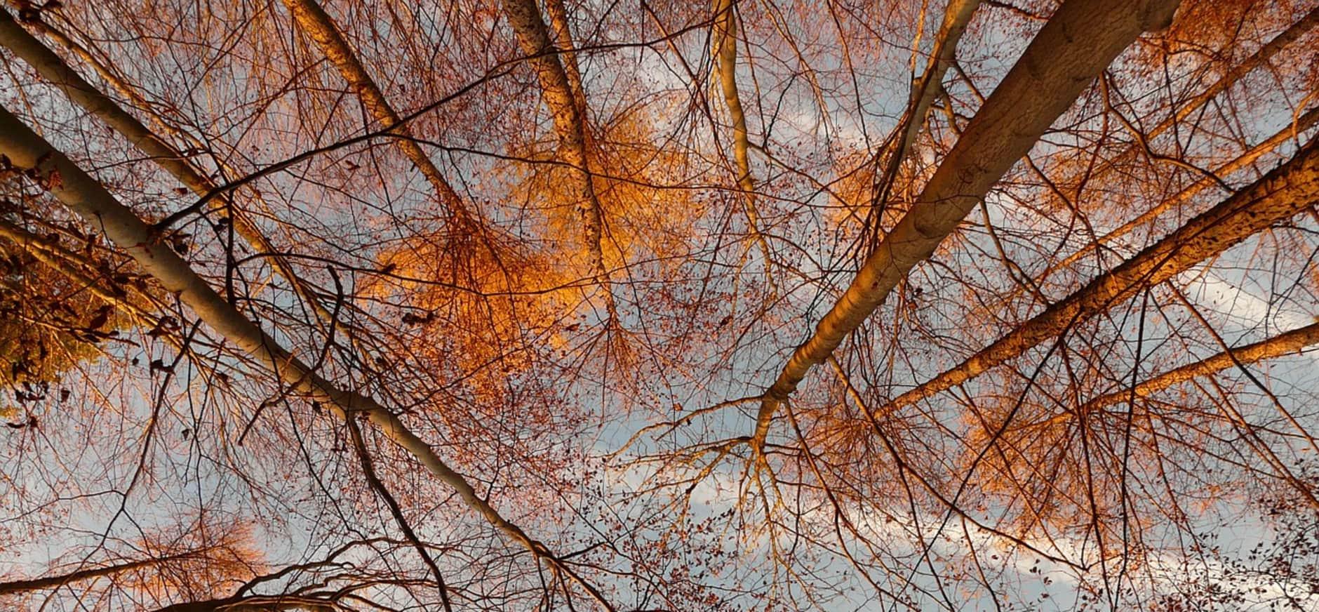 Spiegelen in het bos