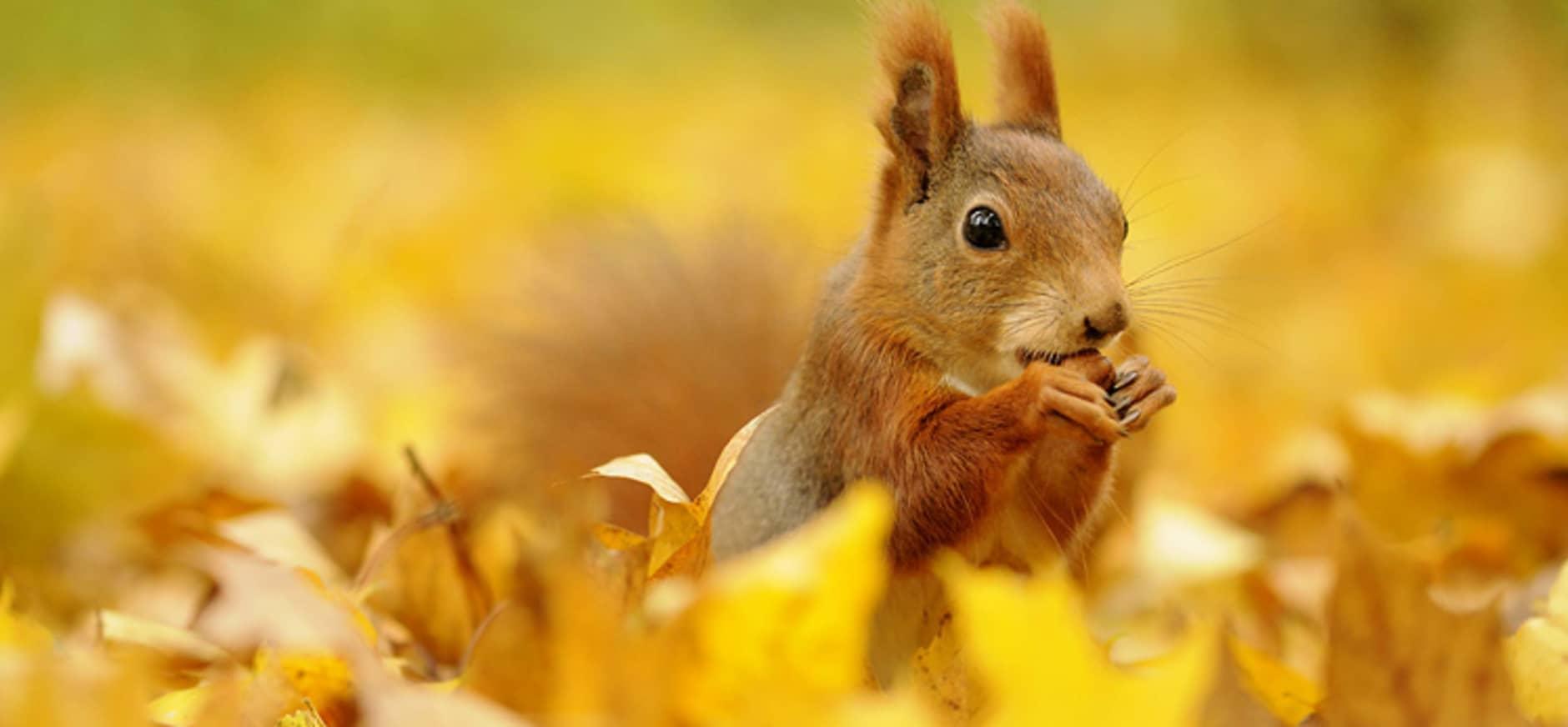 Help bij het onderzoek naar dode eekhoorns