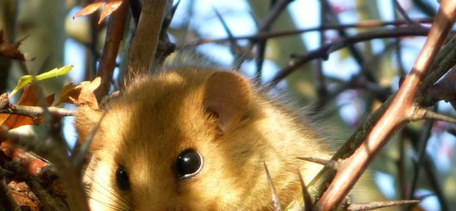 Vloggende Zuid-Limburgse boswachters