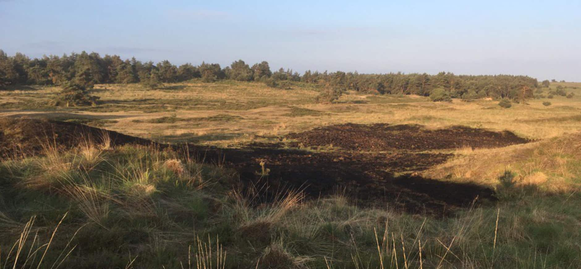Heidebrand in Nationaal Park Veluwezoom