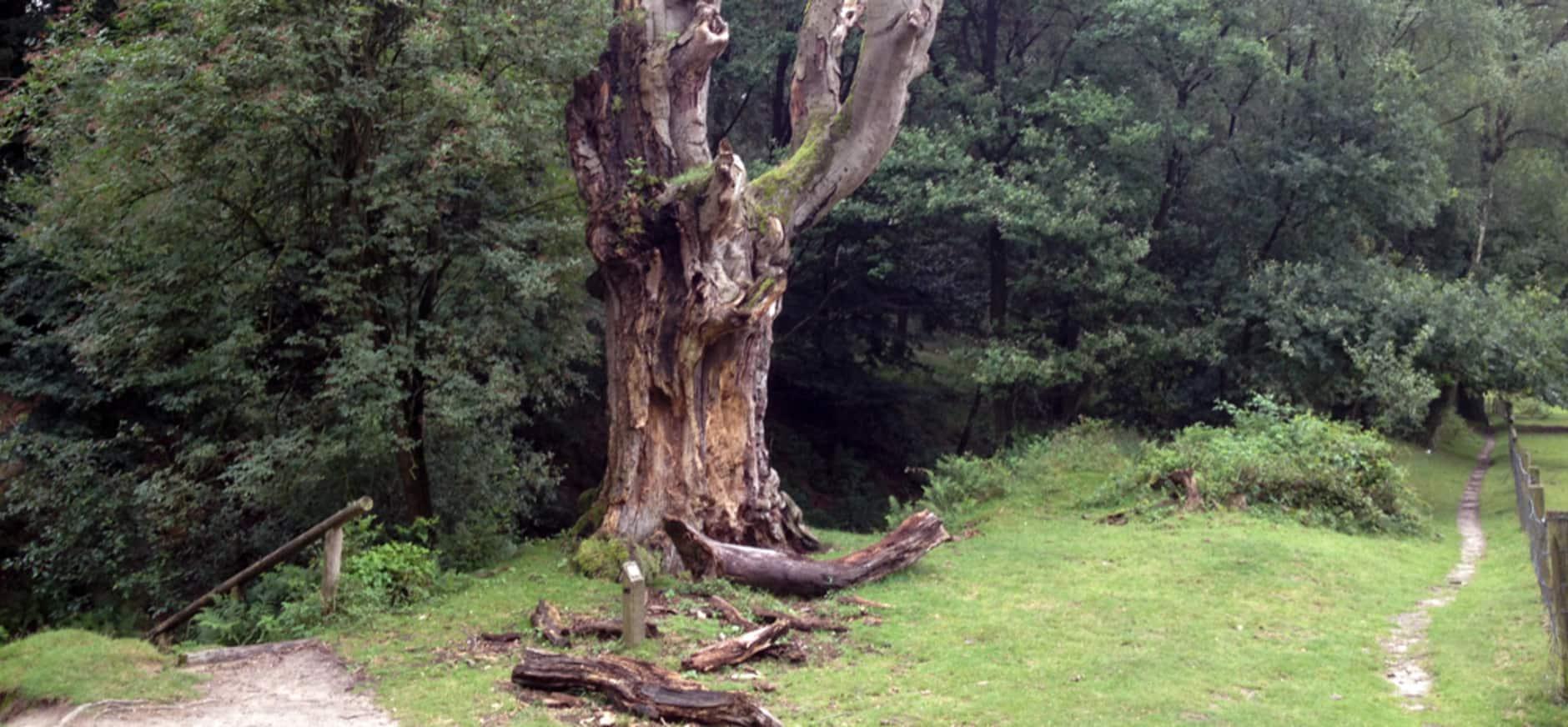 Een boom met een verhaal