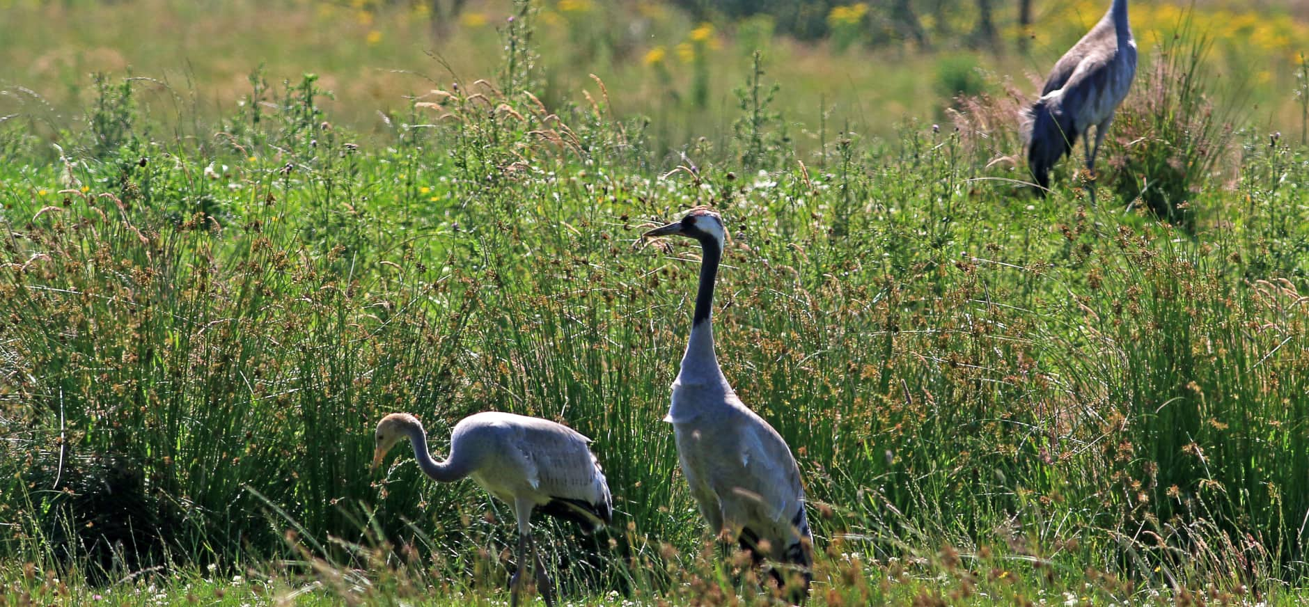 Brede steun Europees Parlement voor natuurbescherming