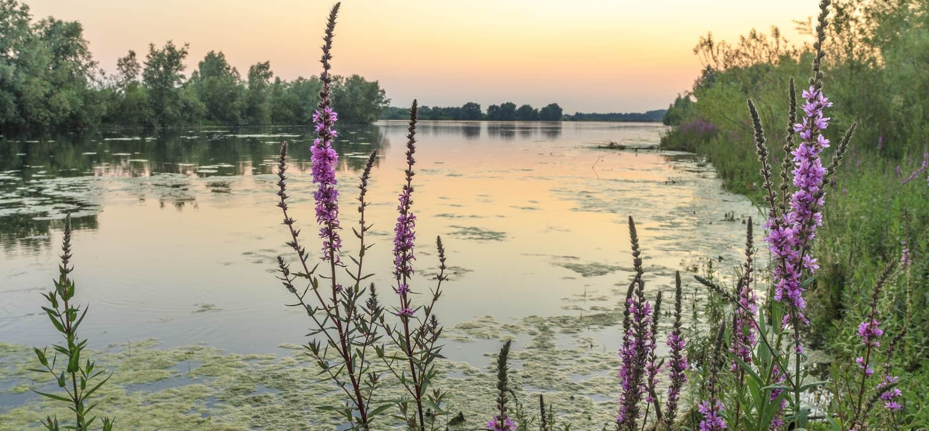 Meer veiligheid, natuur en beleving langs de Maas