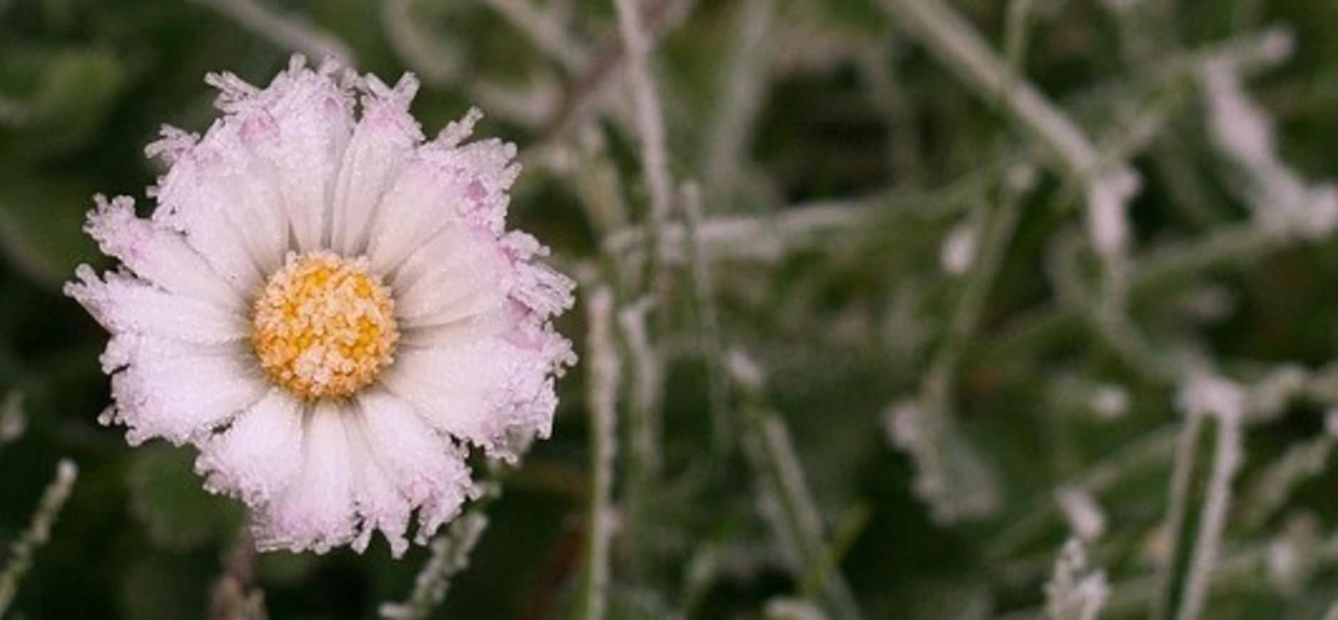 Winterbloemen zoeken