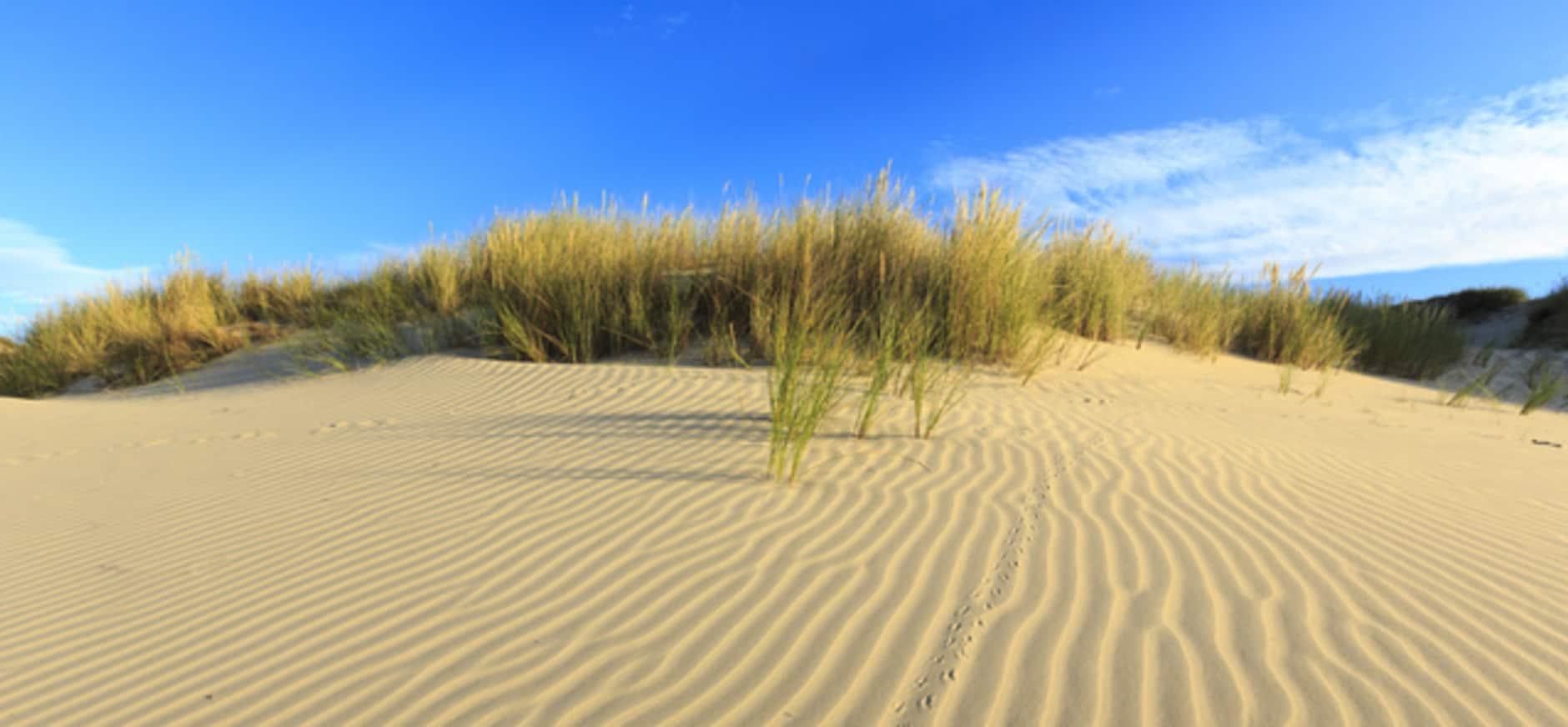 Wat is het mooiste natuurgebied van Nederland?