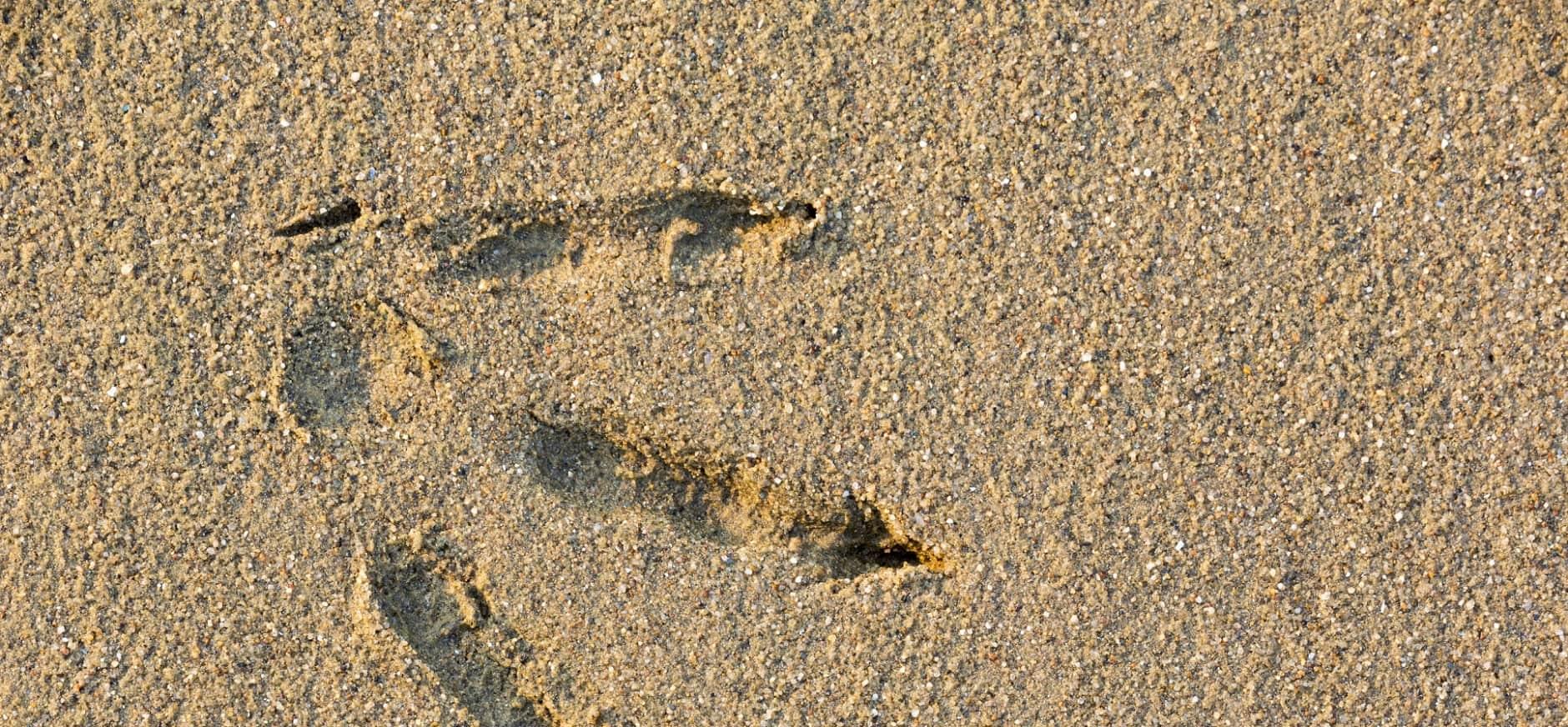 Gipsadruk maken van voetsporen