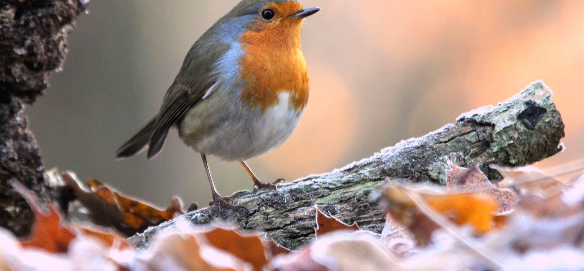 Help alle vogels de winter door in Bezoekerscentrum Nieuwkoopse Plassen