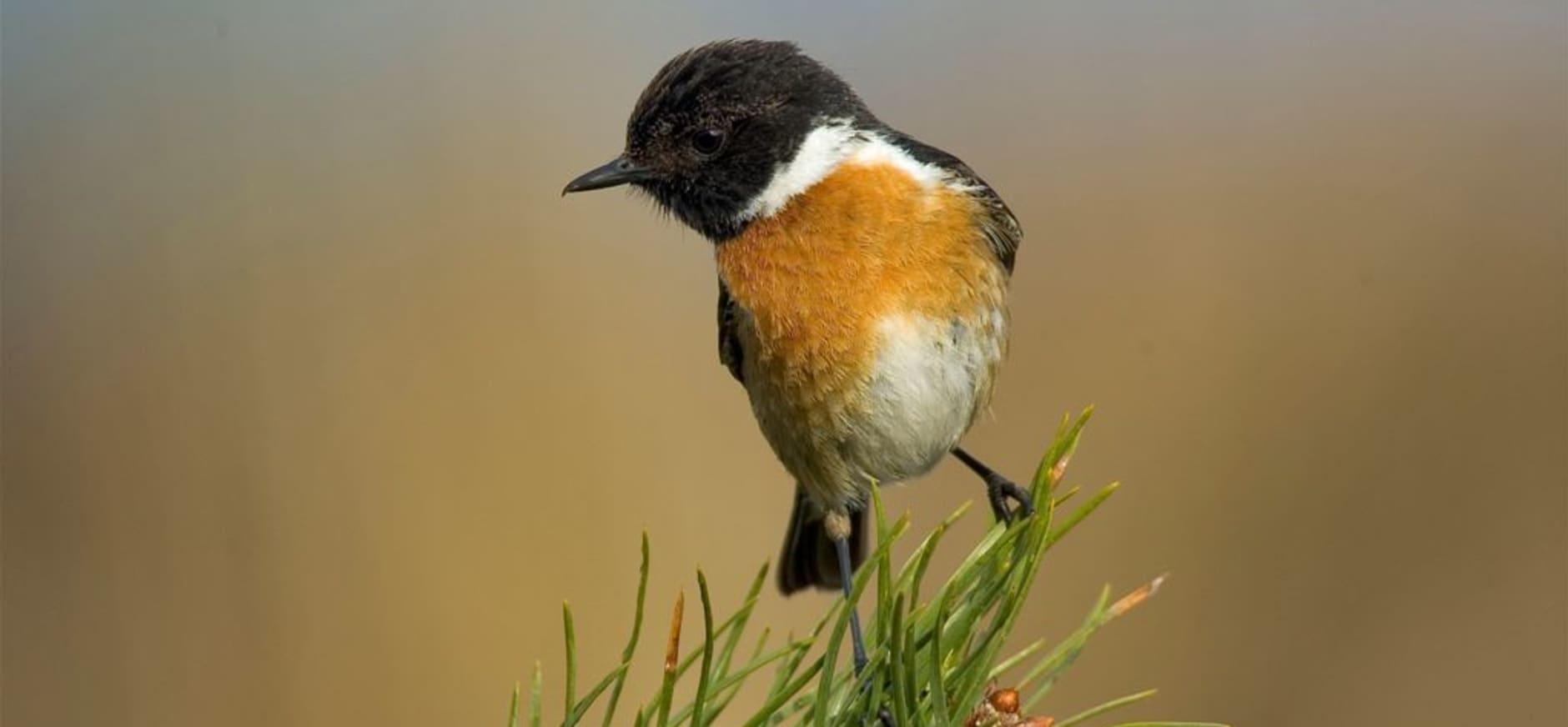 Vroege vogels gezocht voor Nationaal Park Dwingelderveld