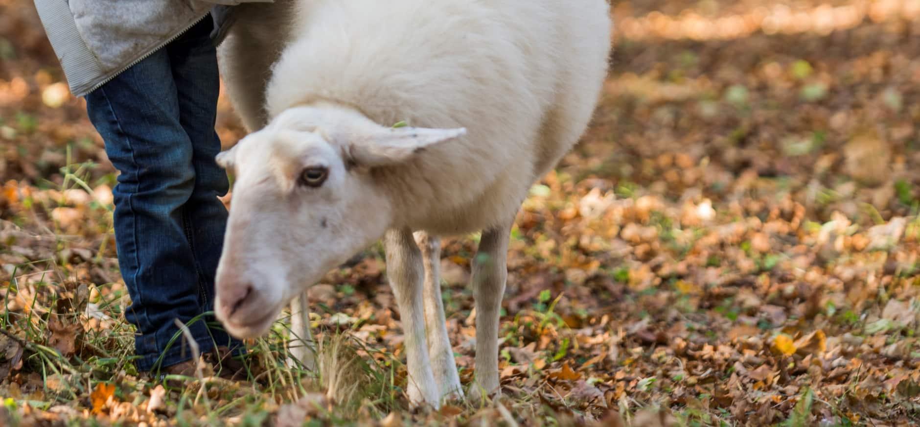 Zachte vlokjes van wol