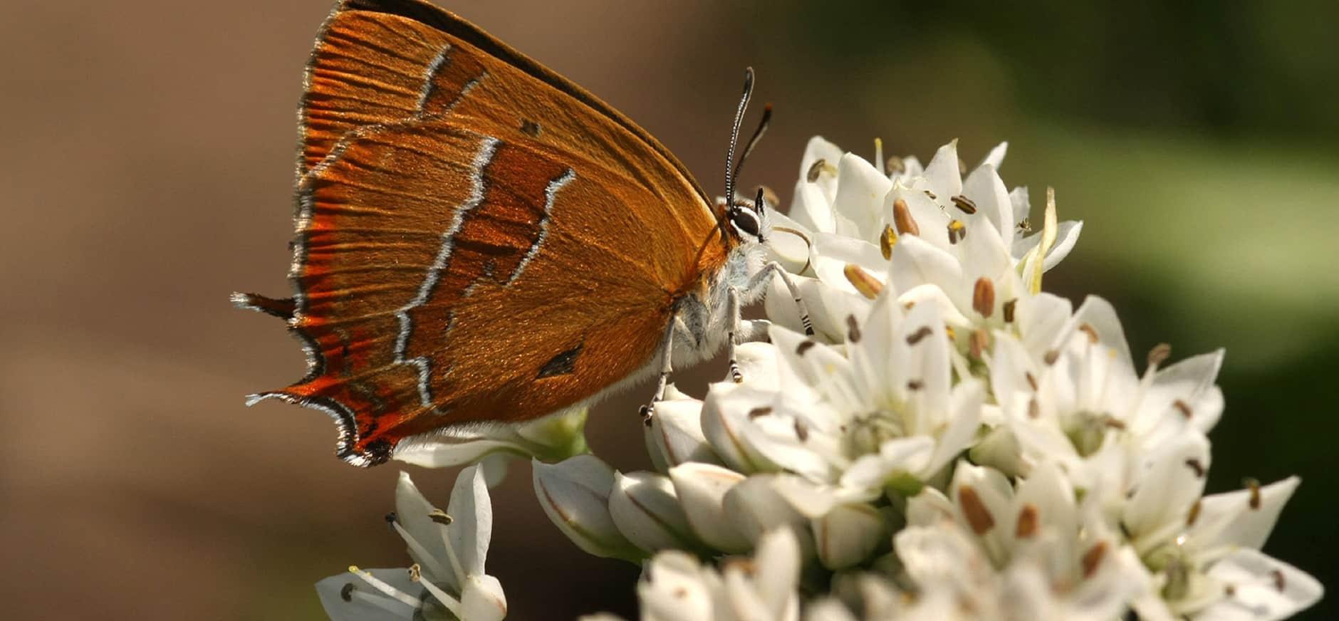 Boswerk voor vlinders in Harderbos