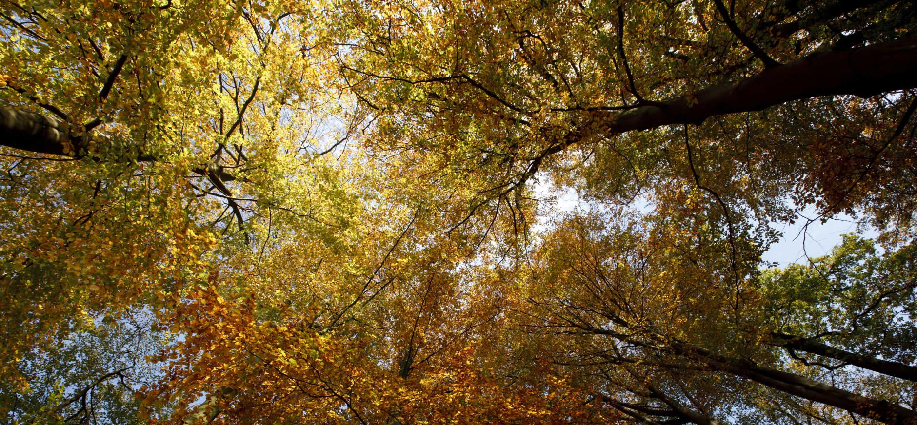 Bomen herfst