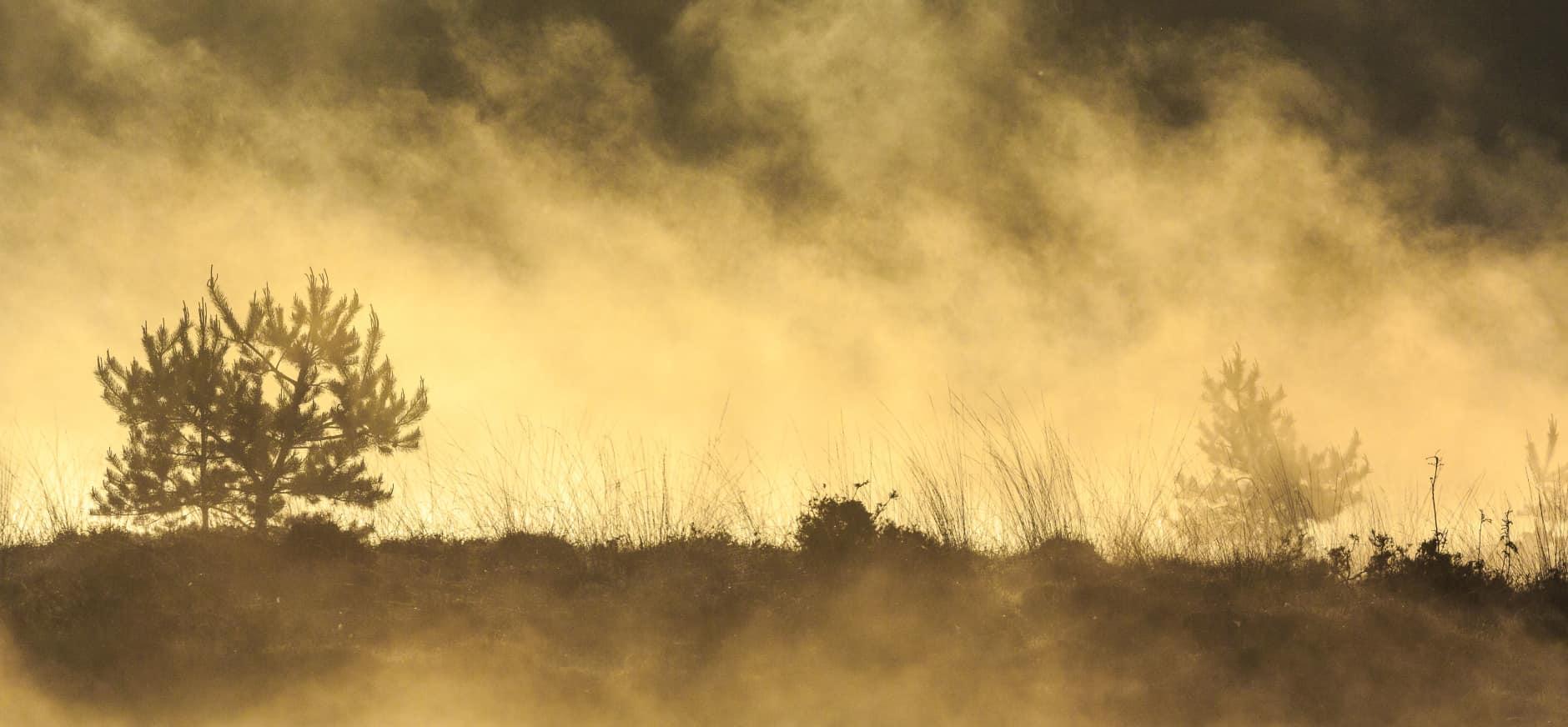 Boom in optrekkende mist op Kampina