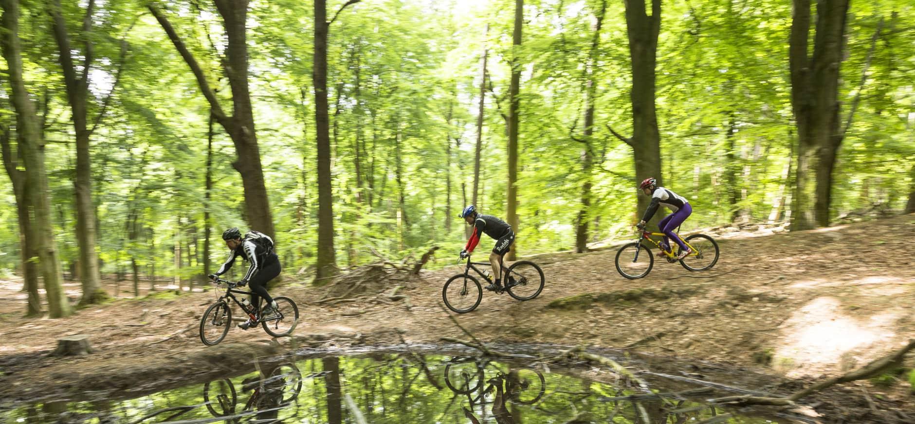 Mountainbiken in Nationaal Park Veluwezoom