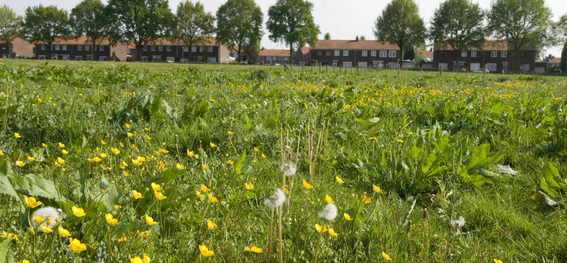 Hof van Limburg