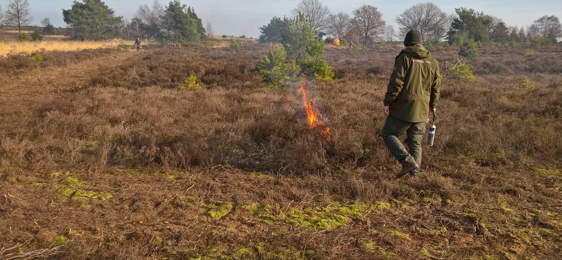 Heidebranden voor verbetering van de biodiversiteit