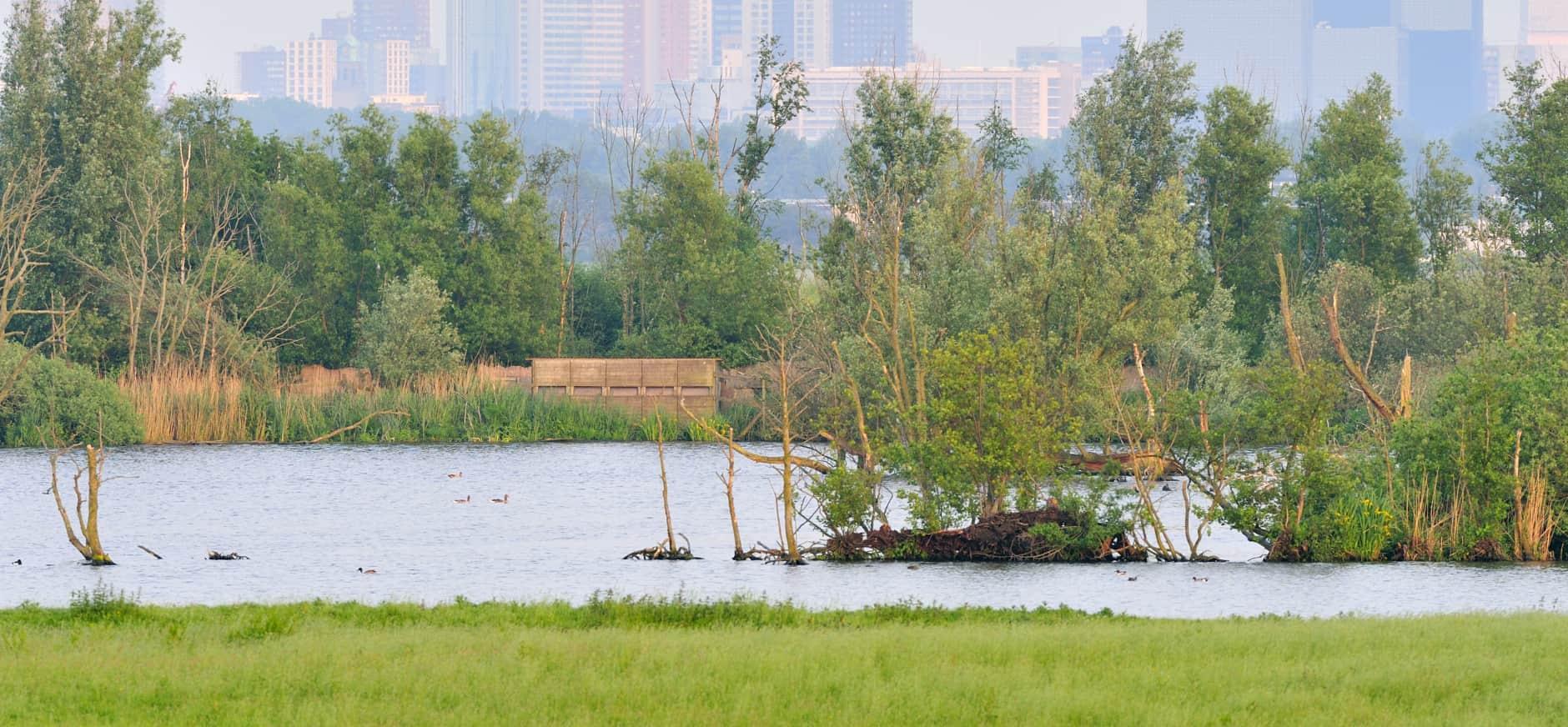 Ackerdijkse plassen met uitzicht op Rotterdam
