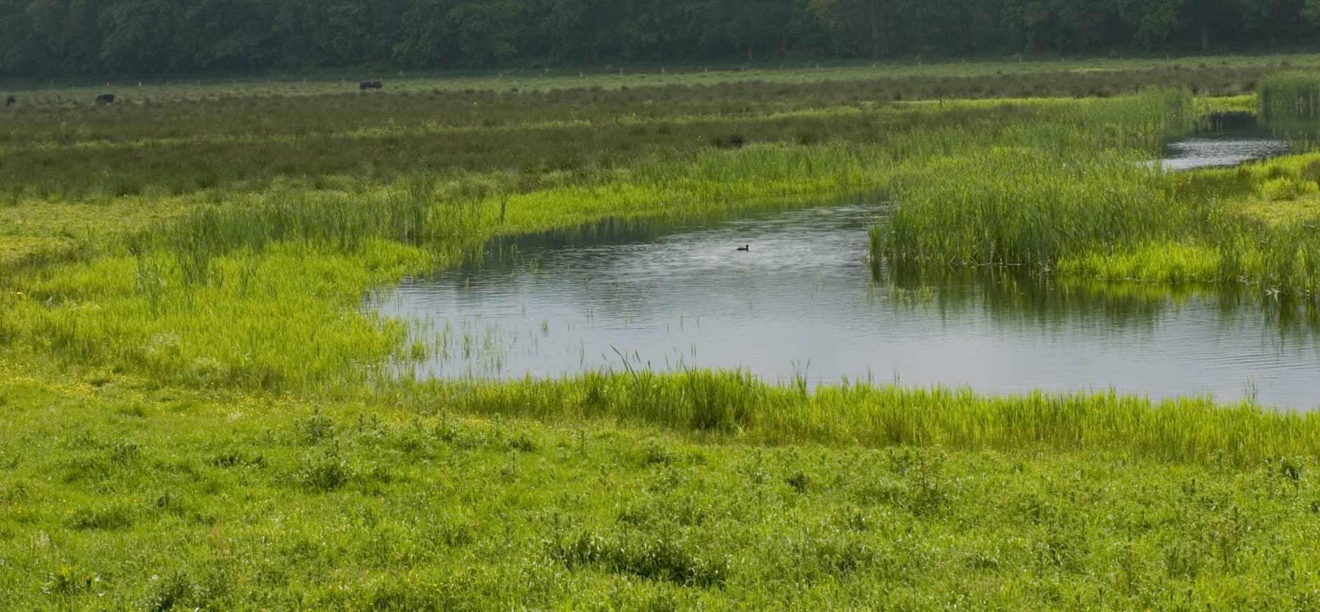 De Schaarsbeek stroomt vrijelijk door het Grote Goor