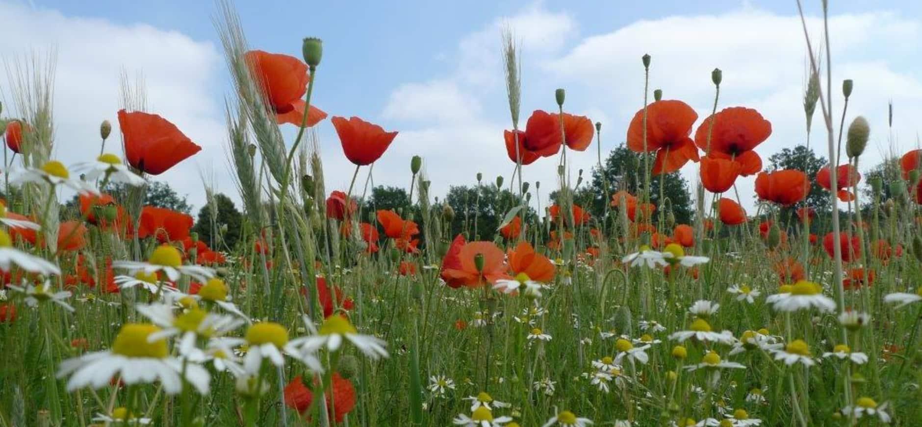 Florarijke akker