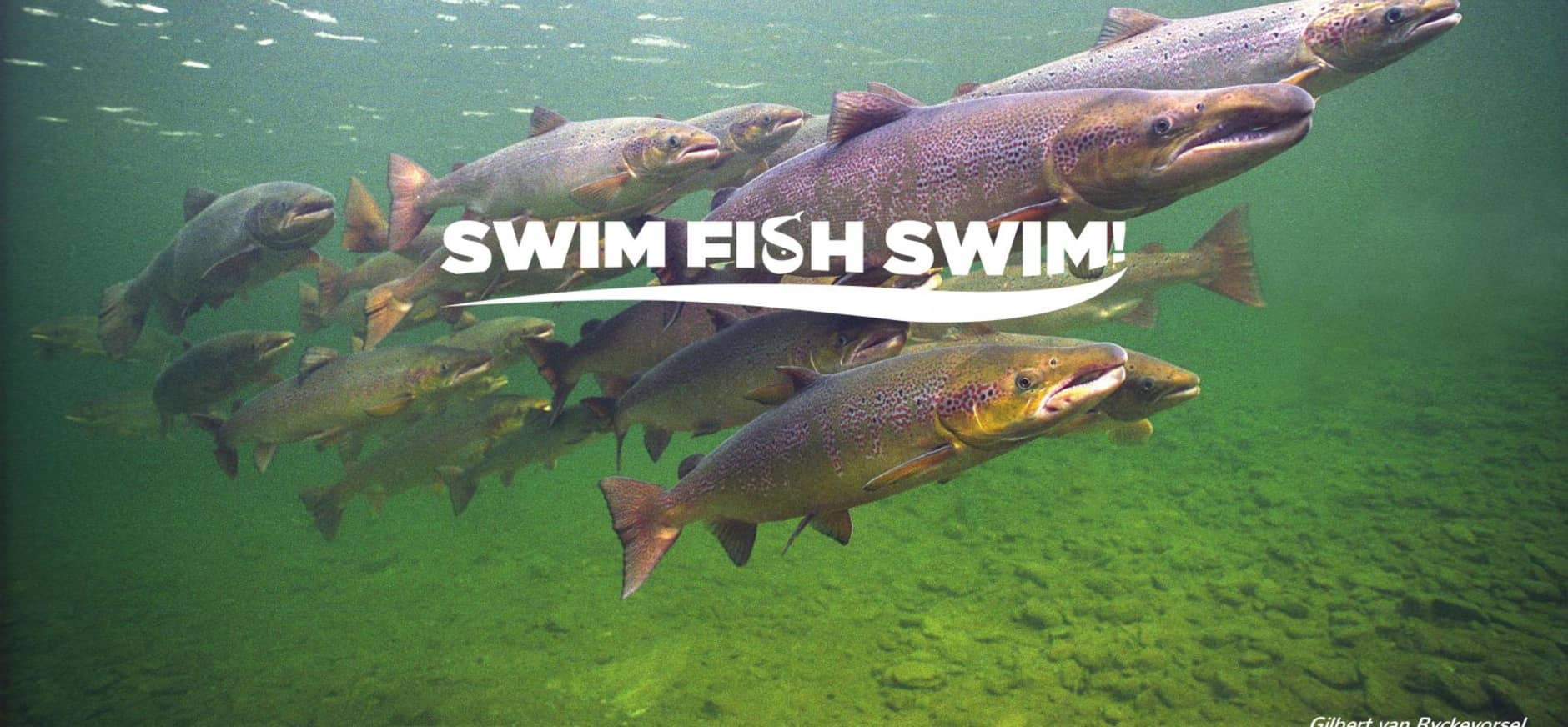 Zalm - Swim, Fish, Swim