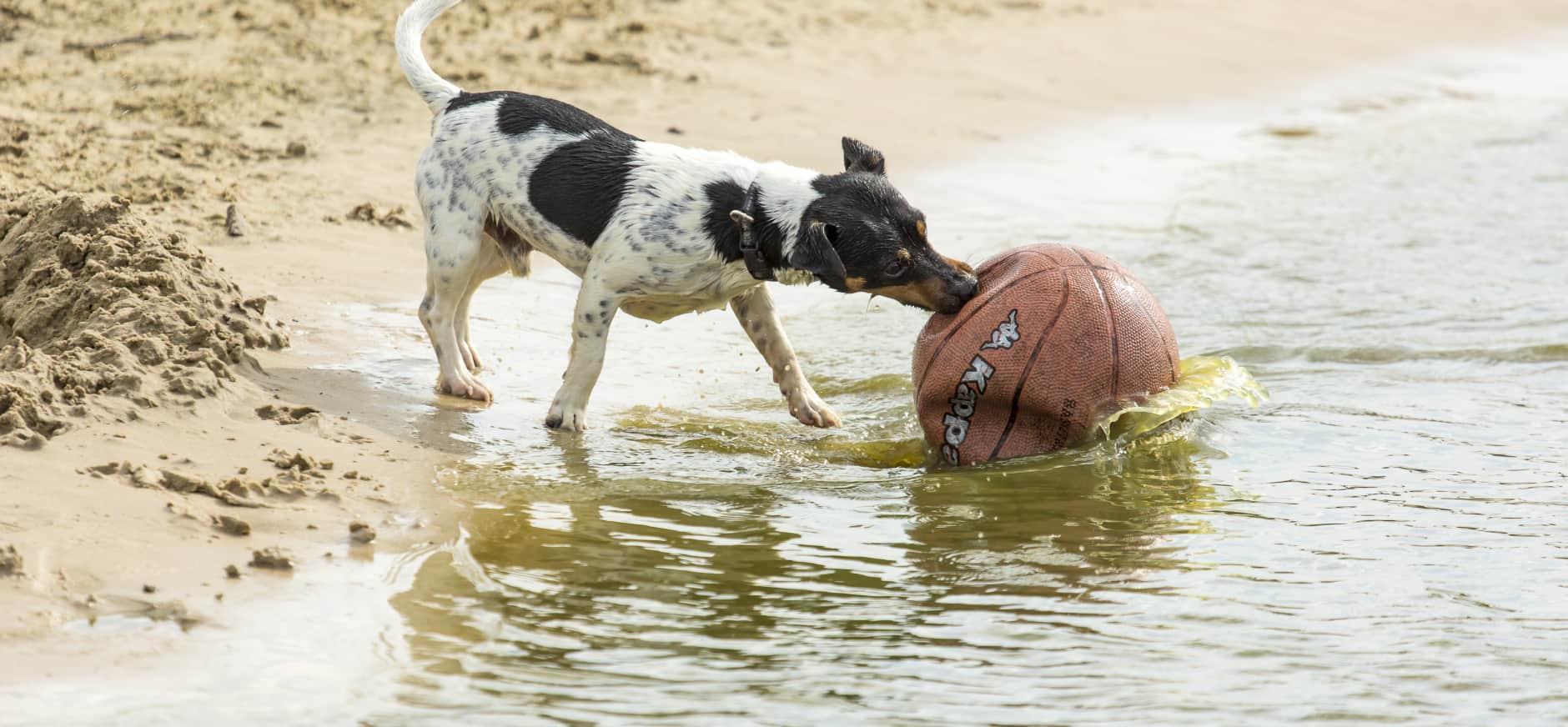 Hondenloslooproutes