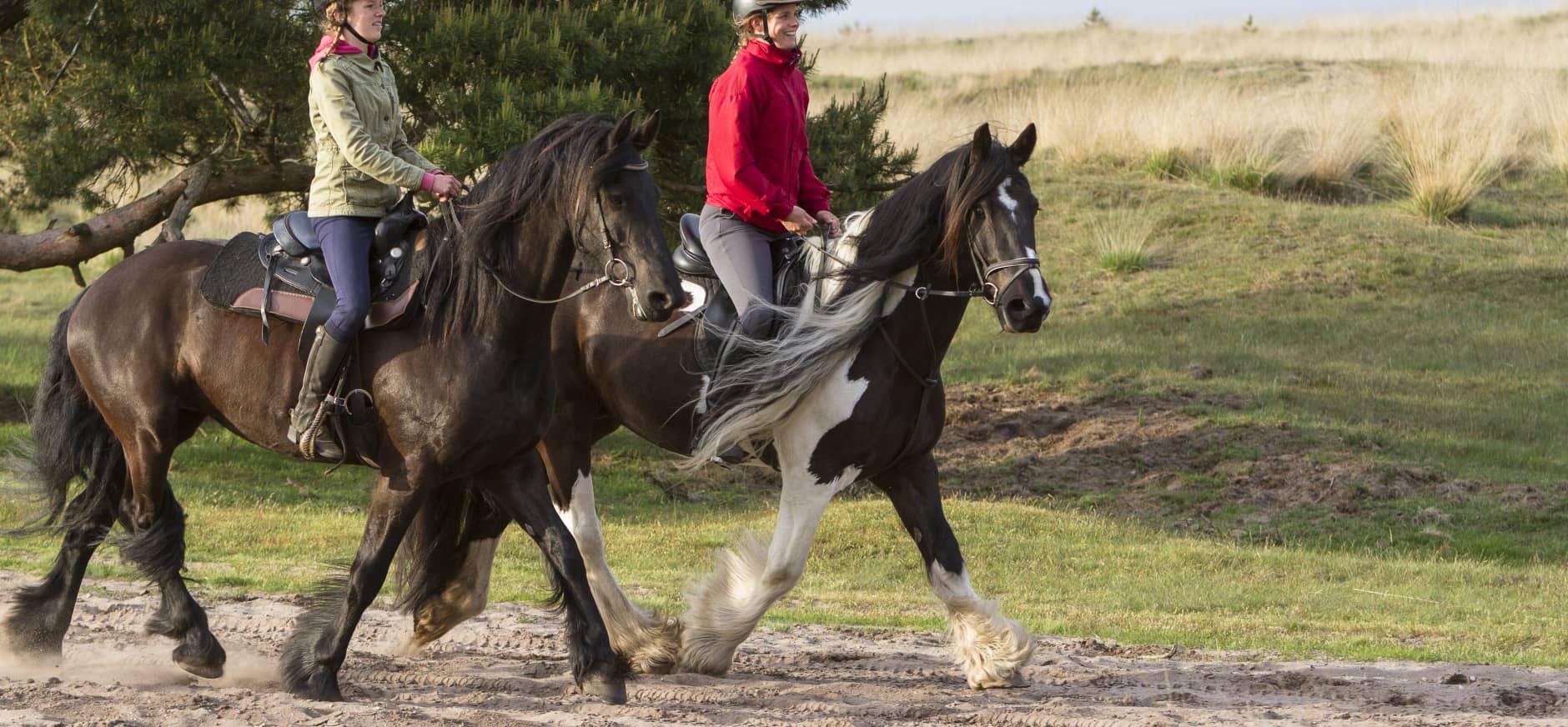 paardrijden in een natuurgebied