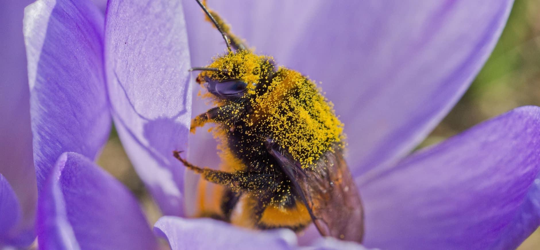 Help de bijen