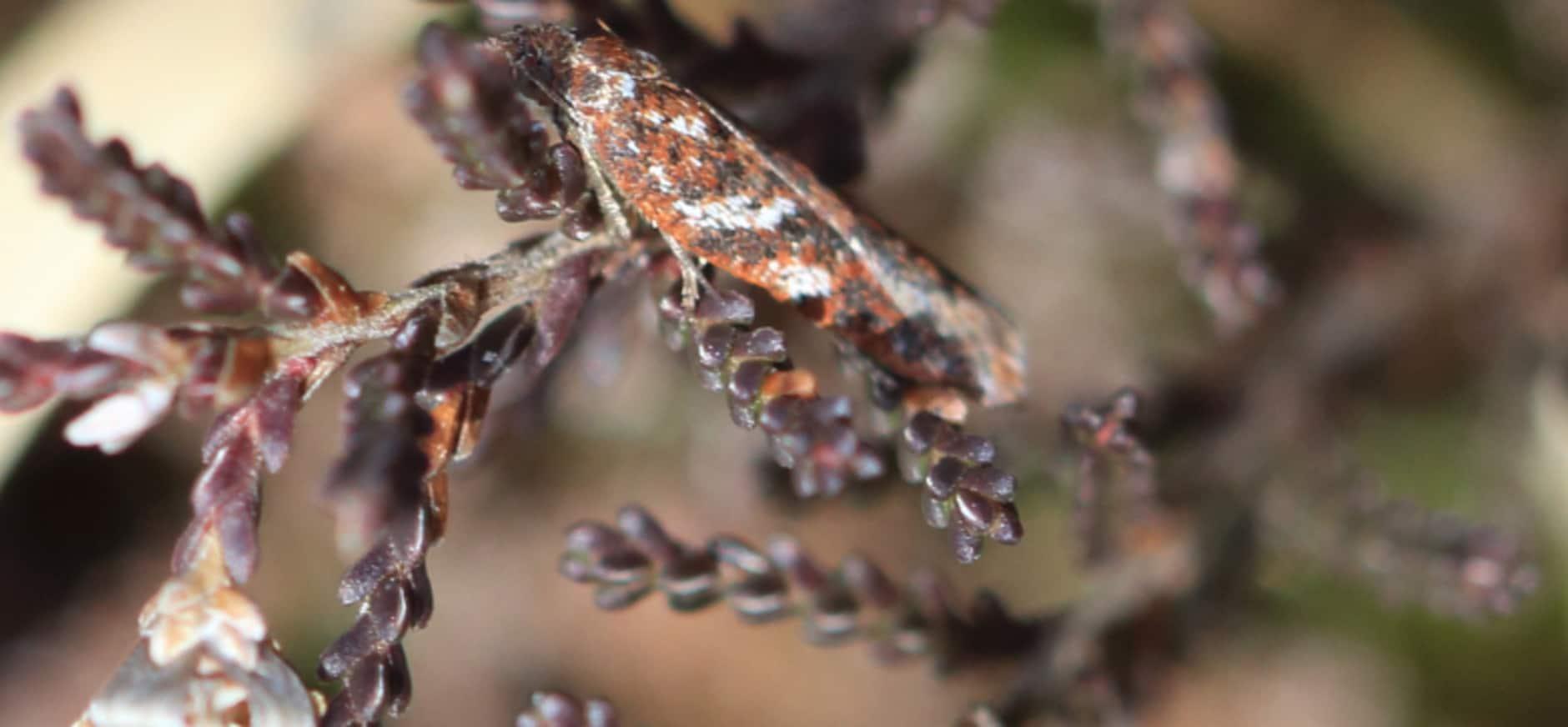 Bijzonder insect aangetroffen op landgoed Oldenaller