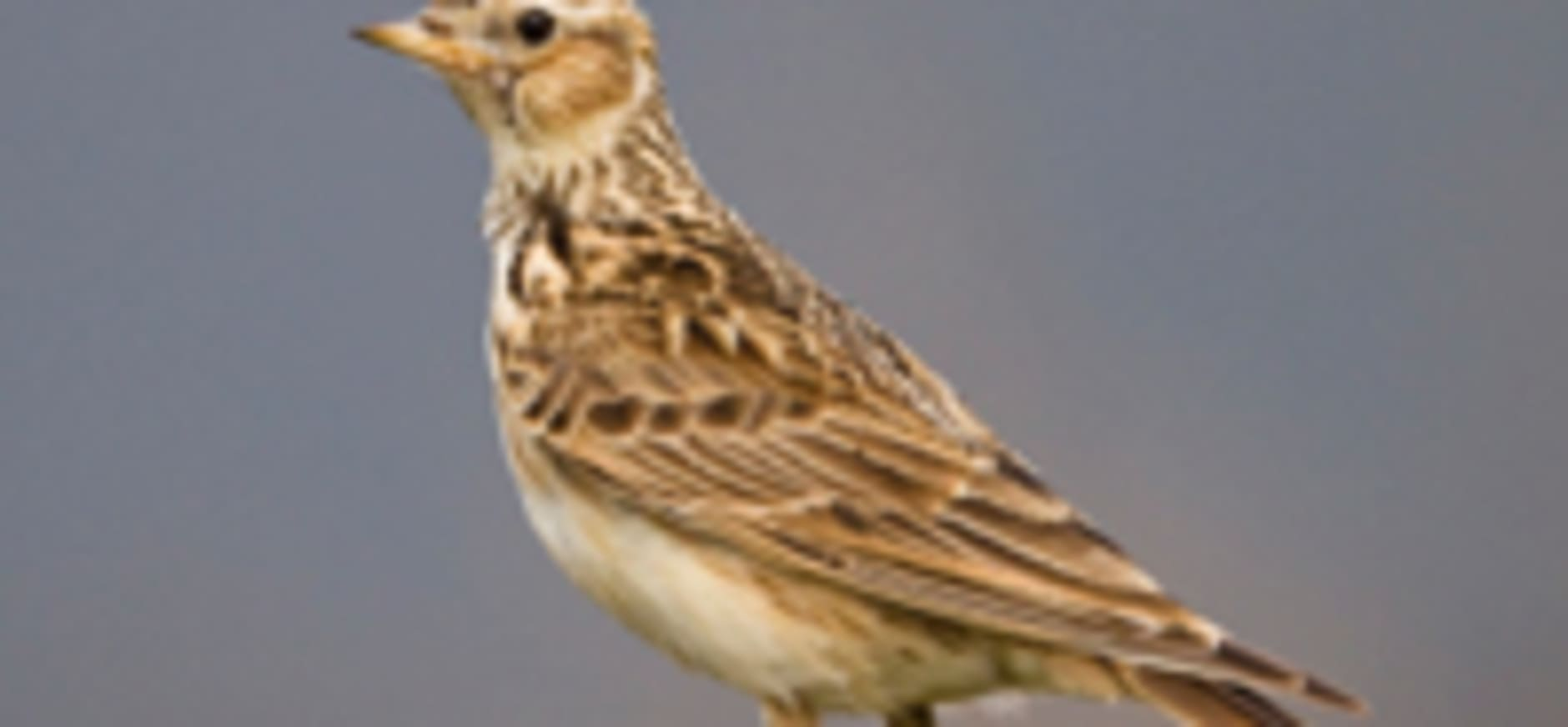 Vogels spotten in de Vughtse Gement