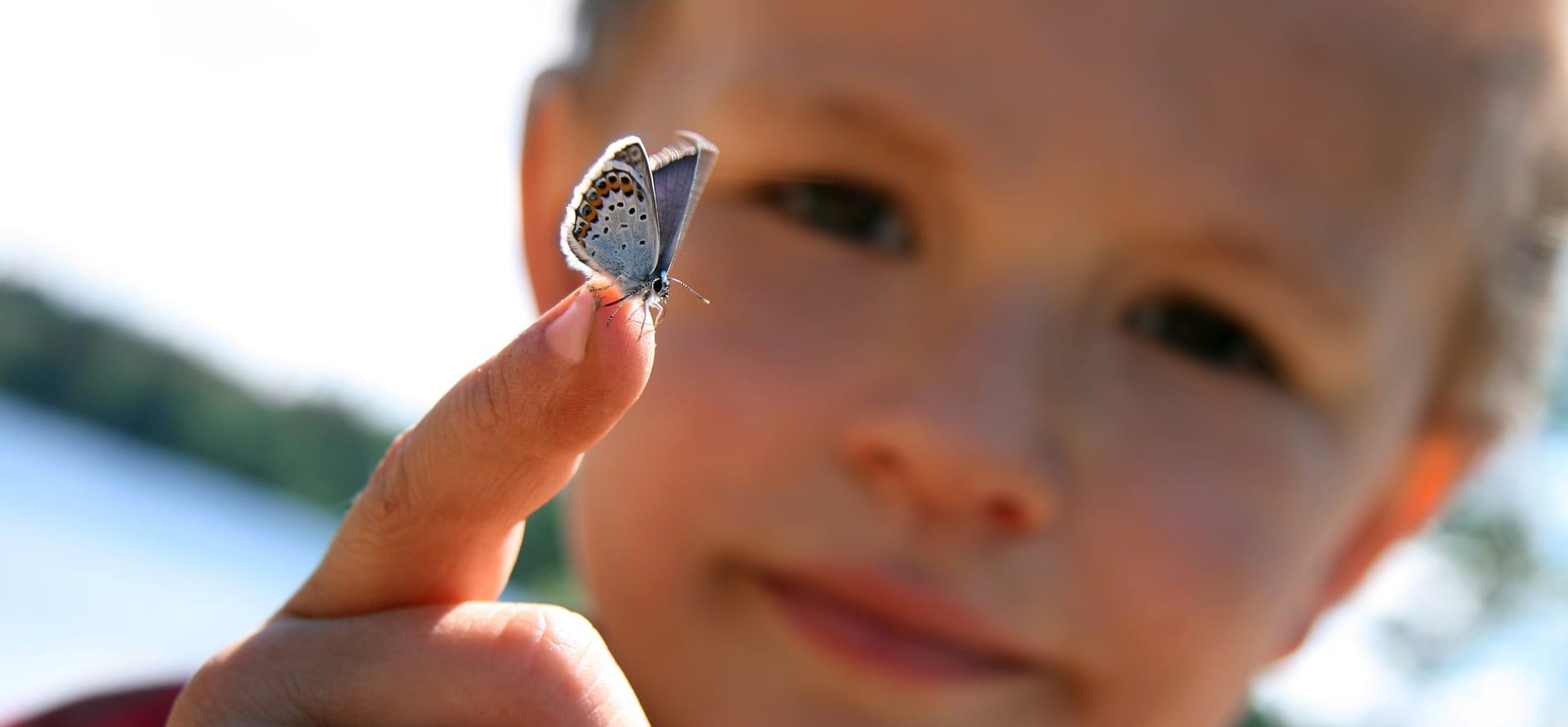 Vlinders lokken