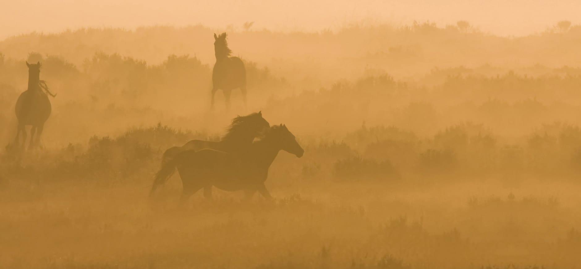 Planken Wambuis paarden