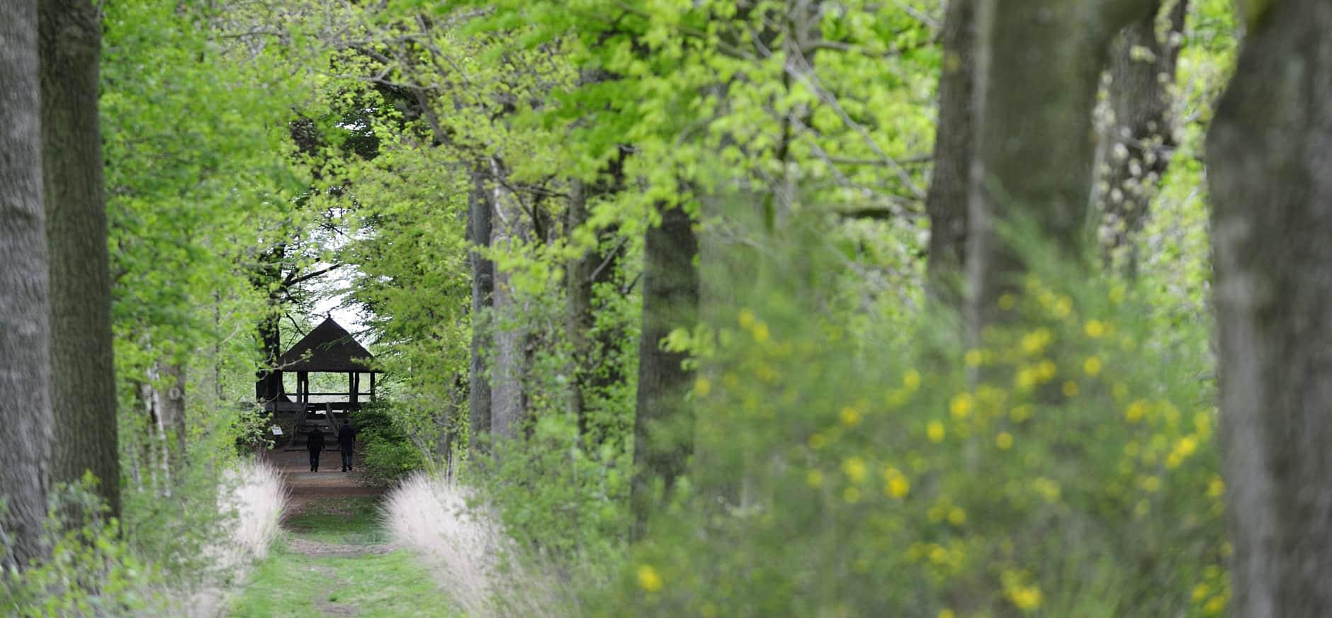 Oude Buisse Heide
