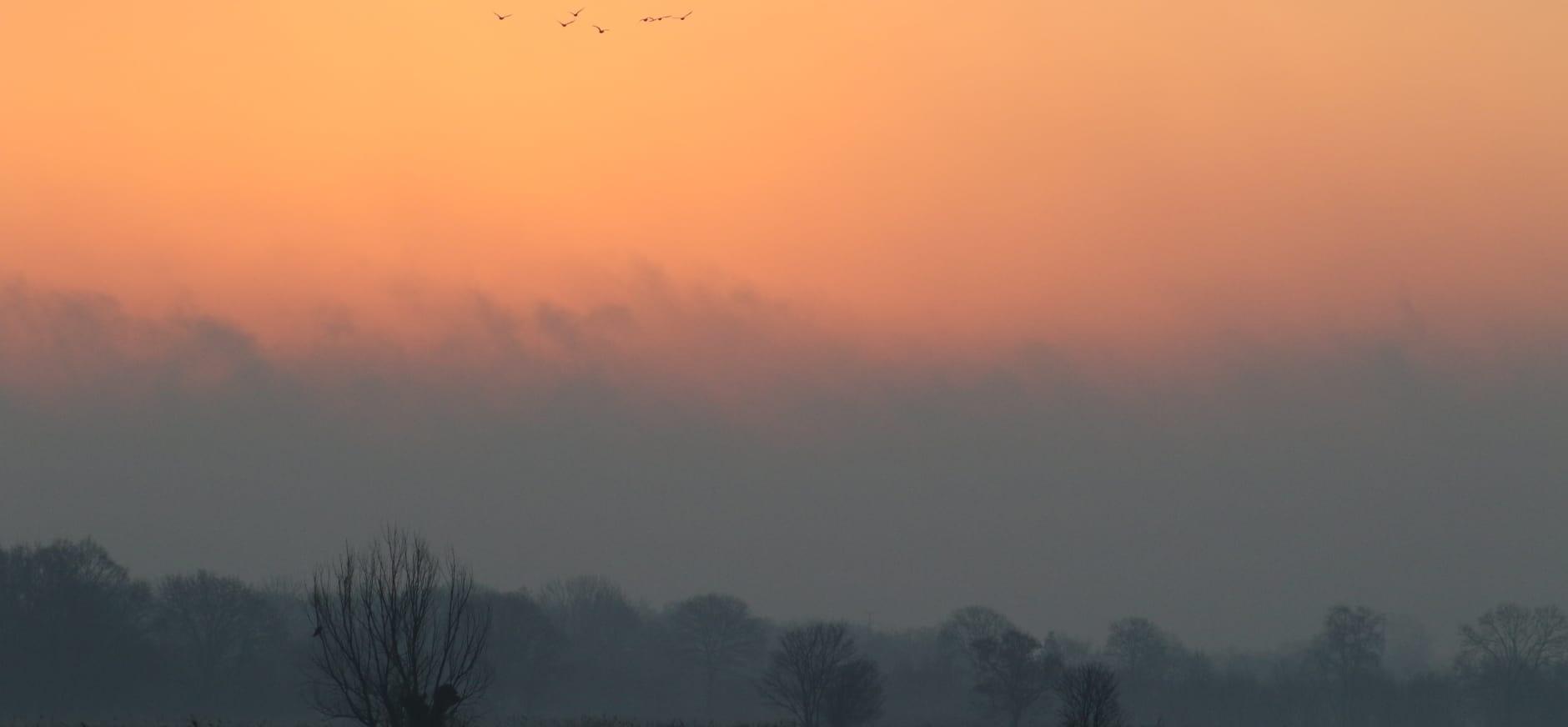 Vliegende ganzen boven Veluwemeerkust
