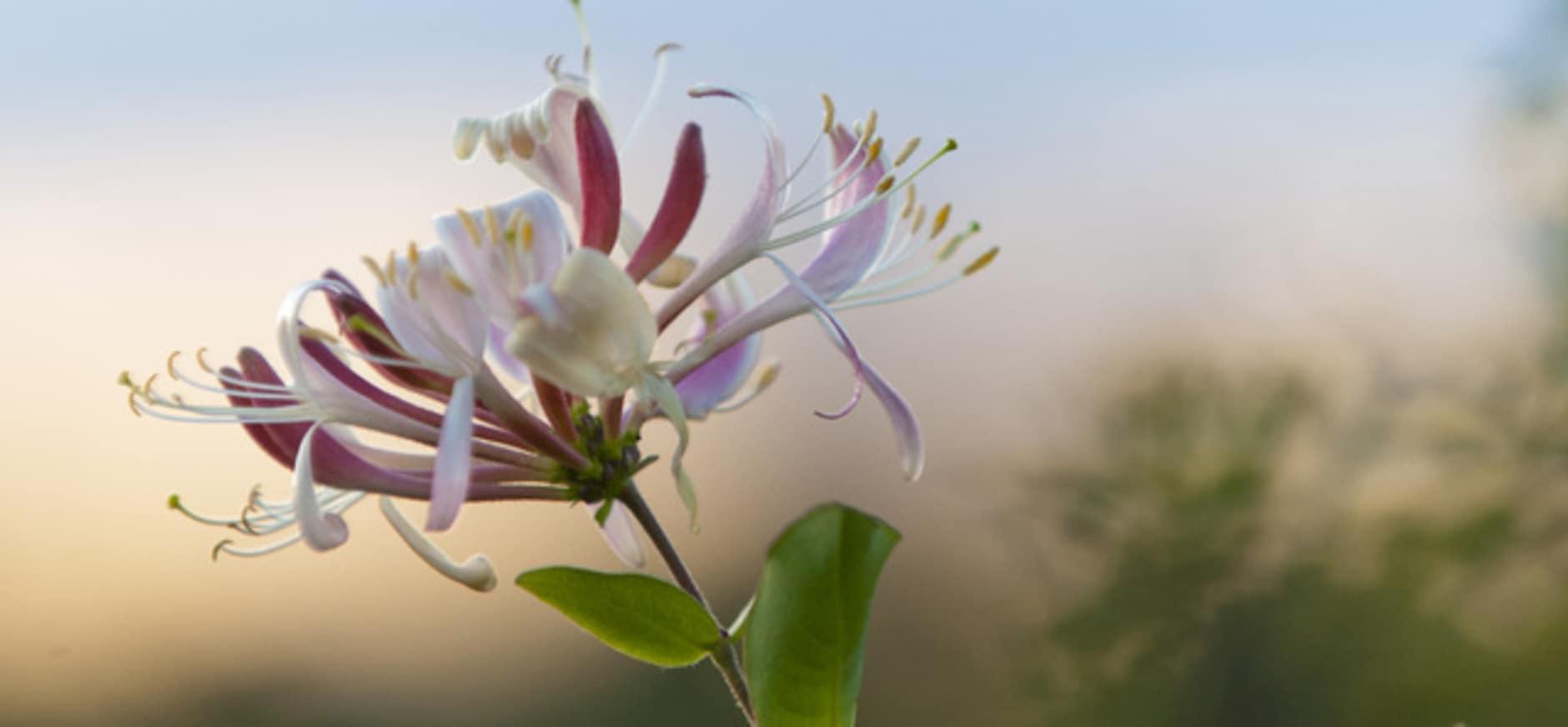 Op bloemenjacht in de nacht