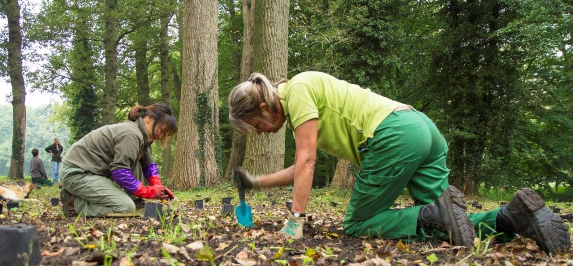 Vrijwilligers gezocht voor mooi werk in parkbos Hackfort