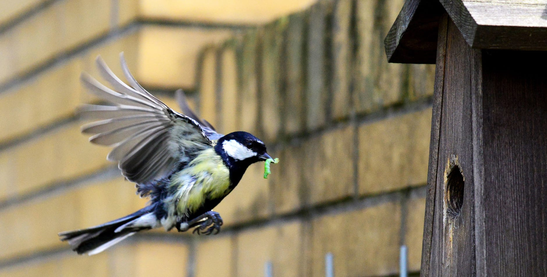290 download - Vogelhuispakket - Pimpelmees