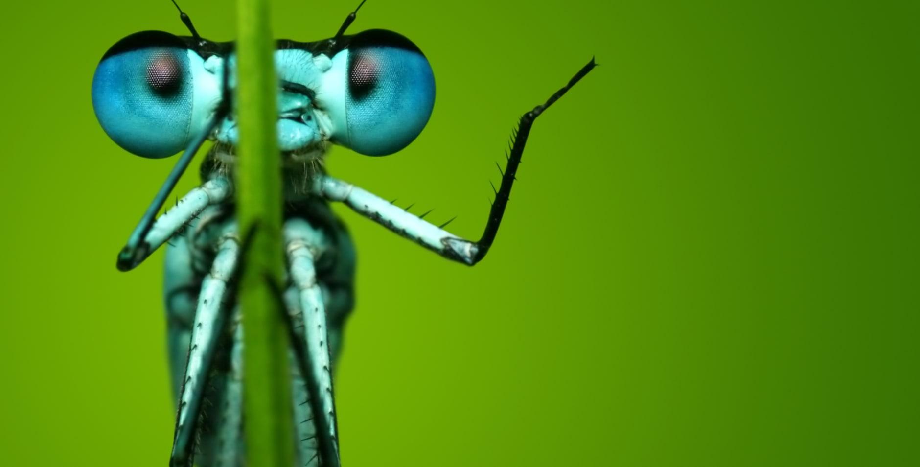 300 kom in actie - insectenpetitie - achterplaat macro