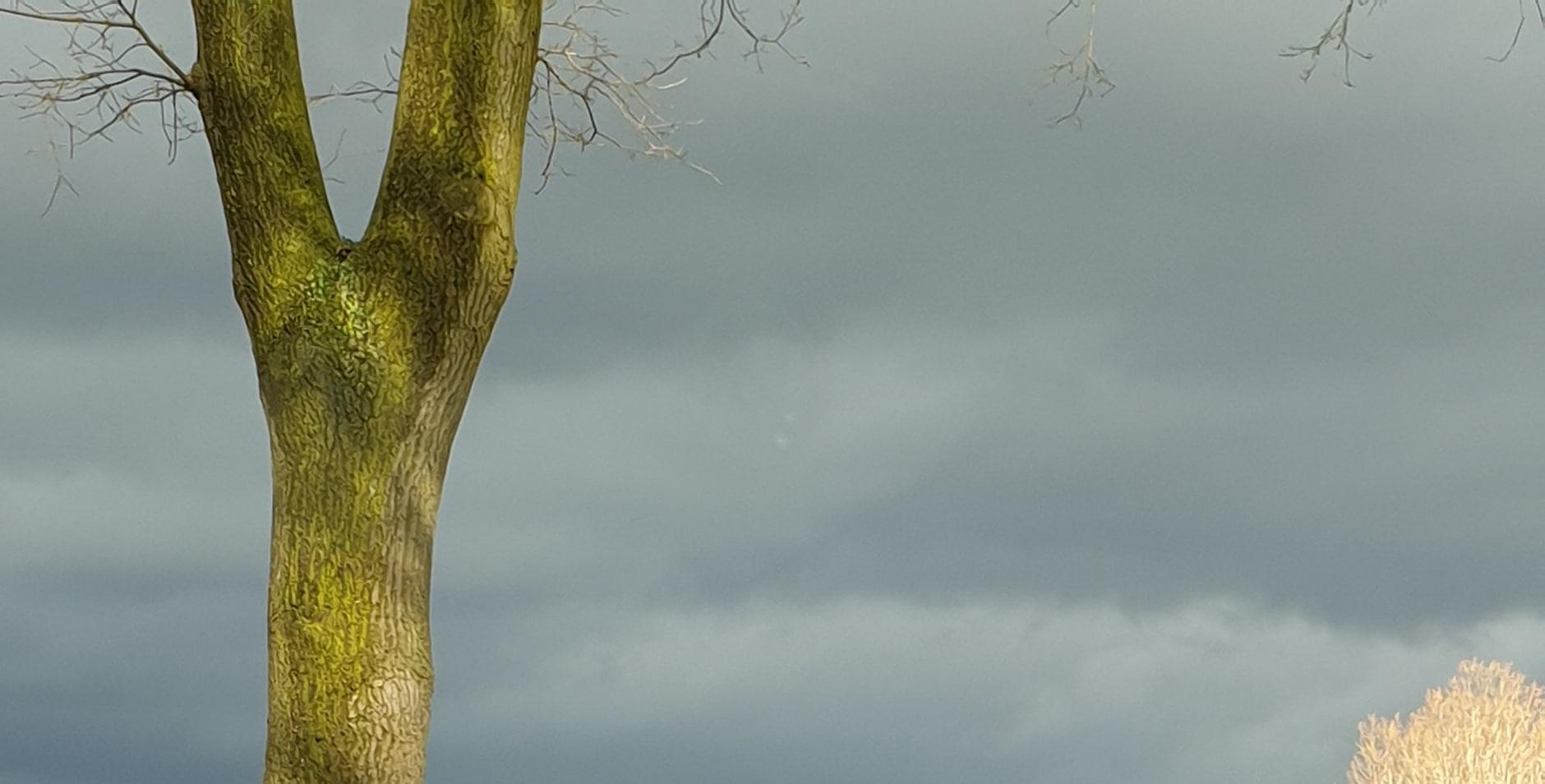 Natuur zo'n van achter bij n donkere lucht
