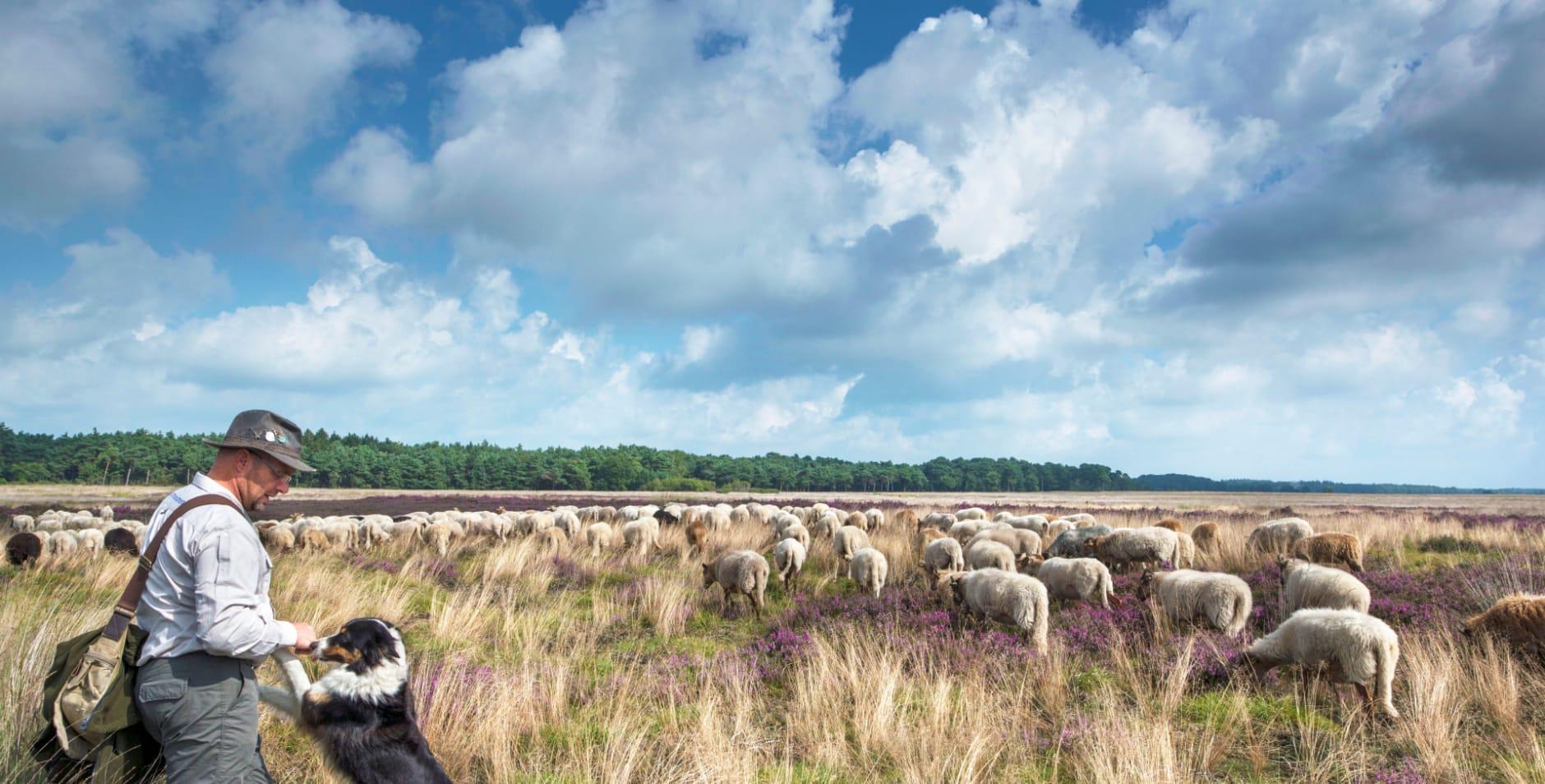 290 download - nm - algemeen - schapenroutes
