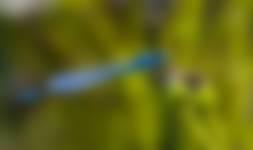 Het leven van de libellen op Huis ter Heide