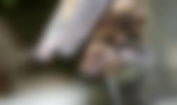 Varen en vleermuizen kijken - Nieuwkoopse Plassen