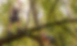 Bomen klimmen - OERRR