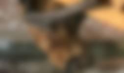 OERRR Ontdek de vleermuizen van Boekesteyn in 's-Graveland