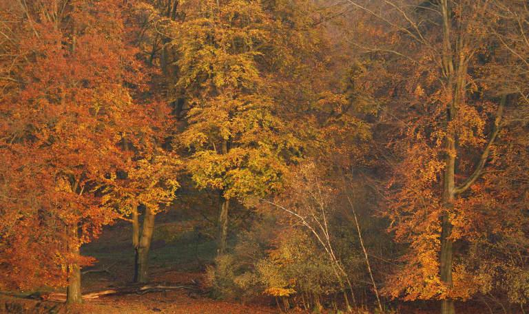 Herfst - Veluwezoom