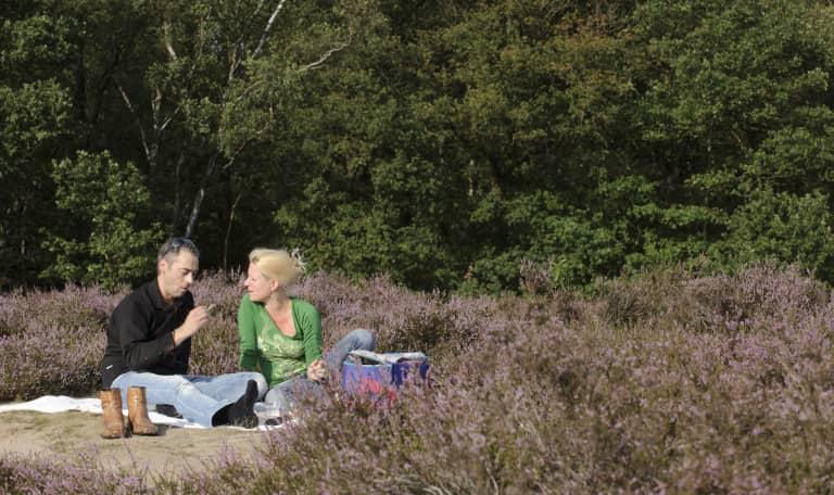 Wandelen en picknick langs de bloeiende heide