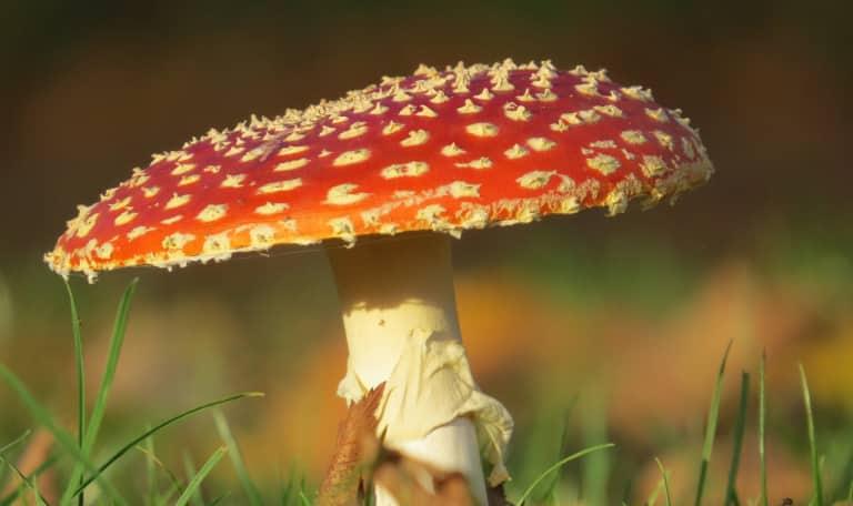 Op zoek naar paddenstoelen op de Kampina