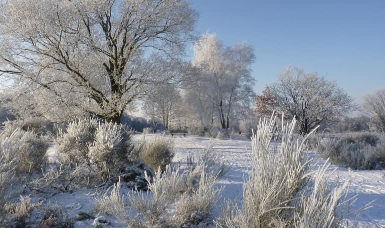 Winterwandeling met huifkar terug - Veluwe
