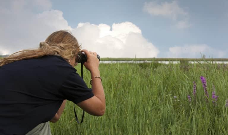 Vogelexcursie op de Scheelhoek