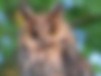 OERRR: ontdek het leven van uilen
